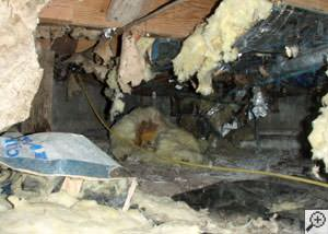 A messy crawl space filled with rotting insulation and debris in Kent Acres.