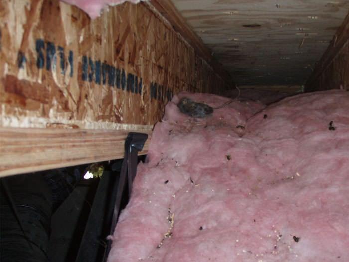 Delmarva Crawl Space Sealing In Dover Ocean Pines Easton