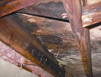 mold and rot in a Four Corners crawl space
